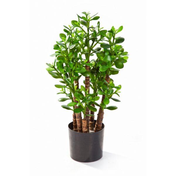 Plantas e Arvores Exoticas - Crassula Ovata| Darden | Importação, Produção e Comercialização de Plantas e Árvores Artificiais