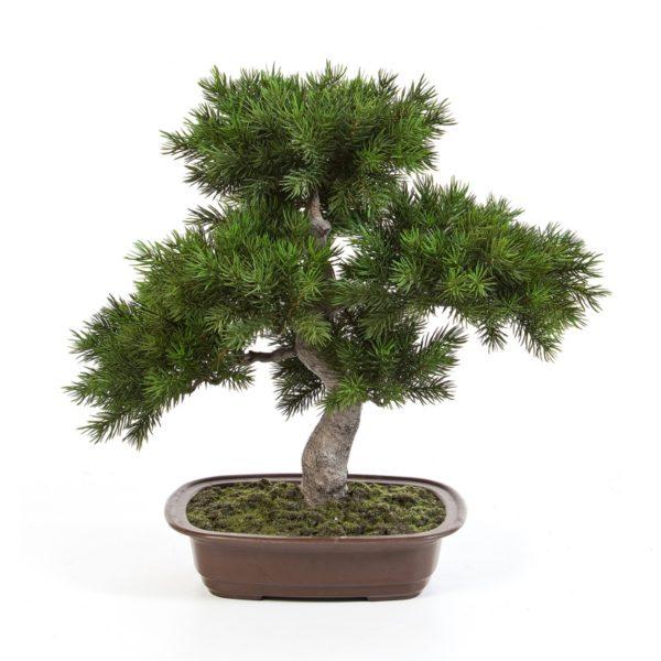 Plantas Arvores Exoticas - Bonsai | Darden | Importação, Produção e Comercialização de Plantas e Árvores Artificiais