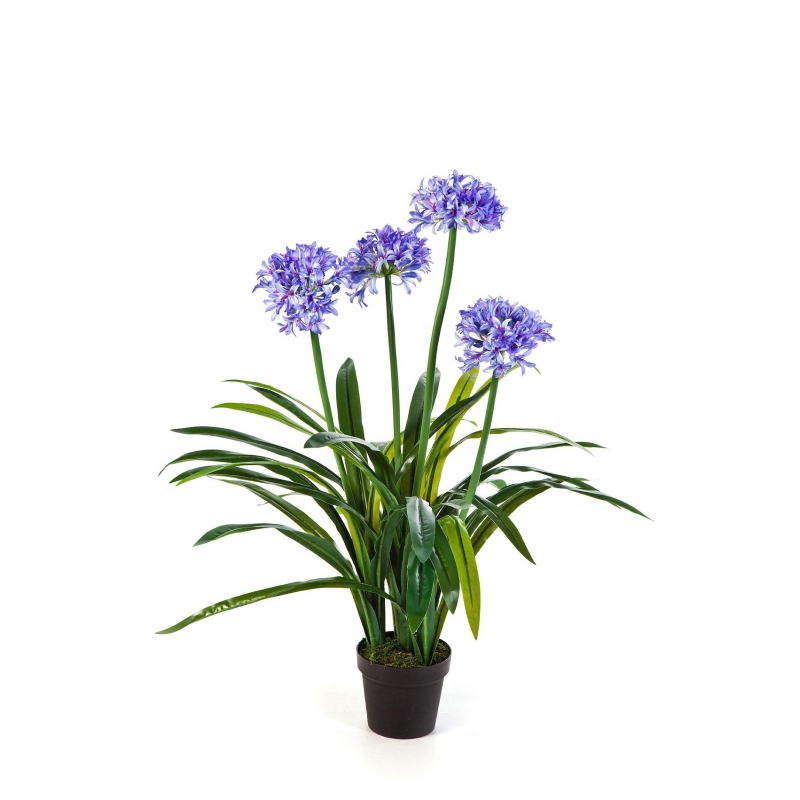 Plantas com flor - Agapathus | Darden | Importação, Produção e Comercialização de Plantas e Árvores Artificiais