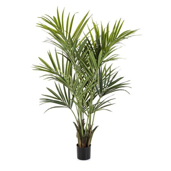 Plantas Arvores Exóticas - Palmeira Kentia | Darden | Importação, Produção e Comercialização de Plantas e Árvores Artificiais